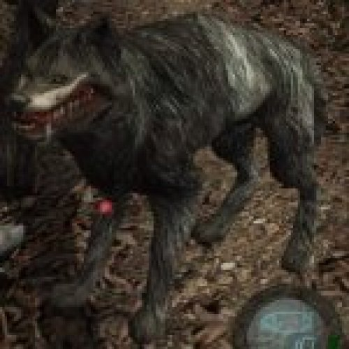 Infected Wolf HD